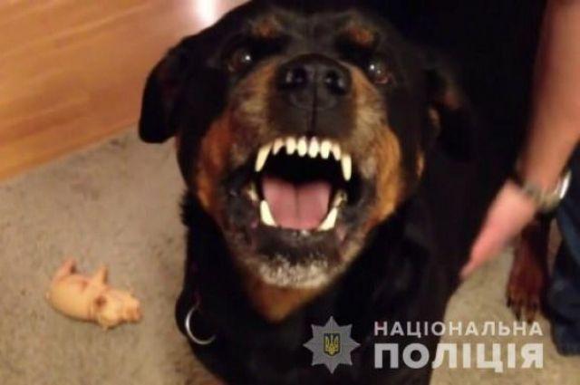 В Киевской ротвейлер насмерть загрыз человека