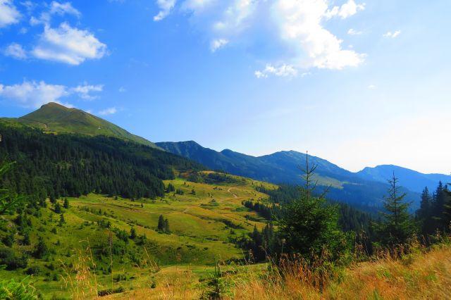 В Карпатах высадили более двух миллионов деревьев