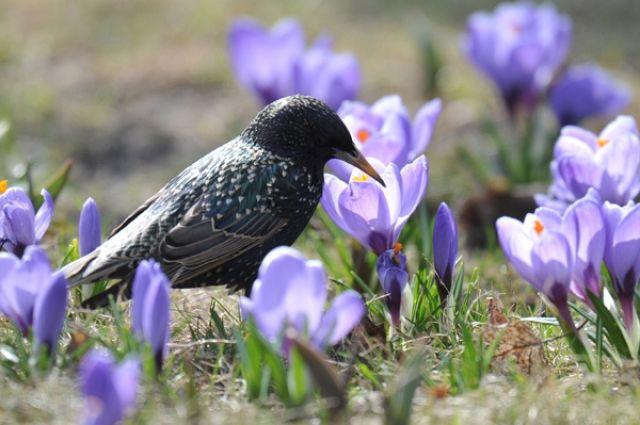4 апреля: праздники дня, именины, календарь, что сегодня полагается сделать