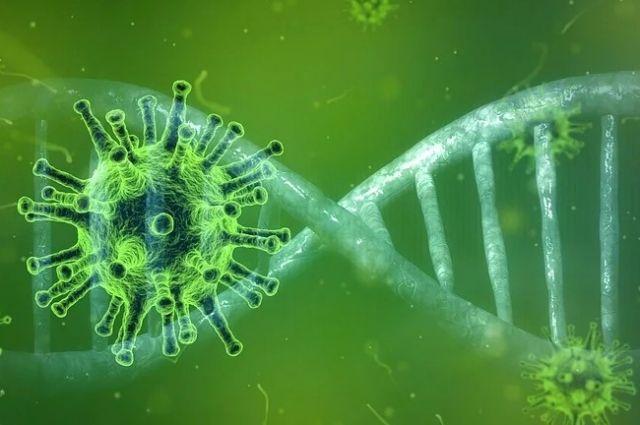 11 случай коронавируса зафиксировали в Новосибирской области