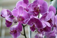 Орхидея: топ-5 советов как правильно ухаживать за цветком