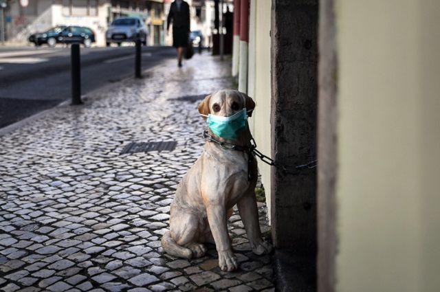 Минздрав объяснил, почему с собаками можно гулять в парке, а с детьми — нет
