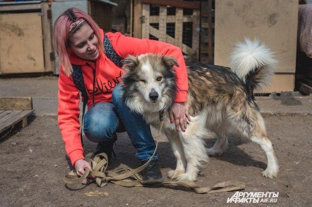 Оренбургские приюты для бездомных животных просят о срочной помощи.