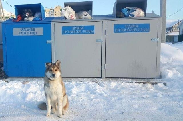 Новые контейнеры оставили собак без развлечения