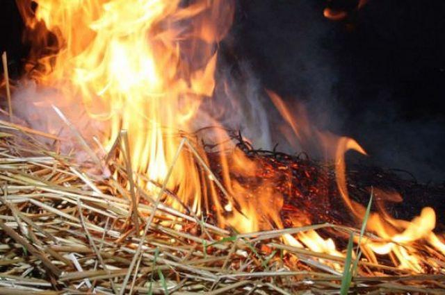 Запрет на самовольное сжигание травы и листьев: размеры штрафов, детали