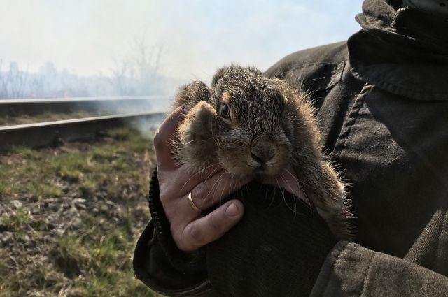 Спасли зайчонка и дачи: в Хмельницкой области ликвидировали пожар