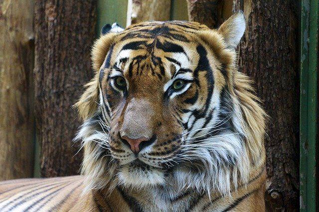 Тюменский зоопарк снабдили кормом на полторы недели