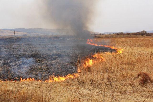 Верховная Рада увеличила штрафы для поджигателей сухой травы