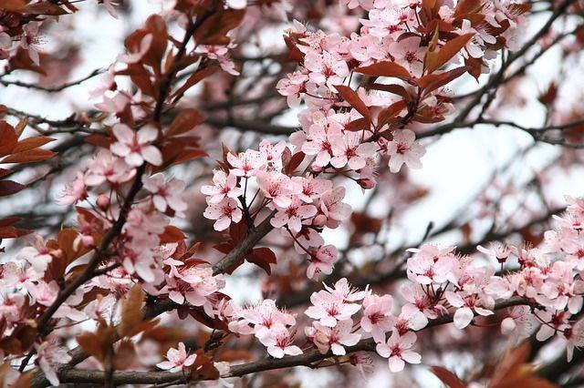 14 апреля: праздник в Украине, церковный праздник, именины, приметы дня