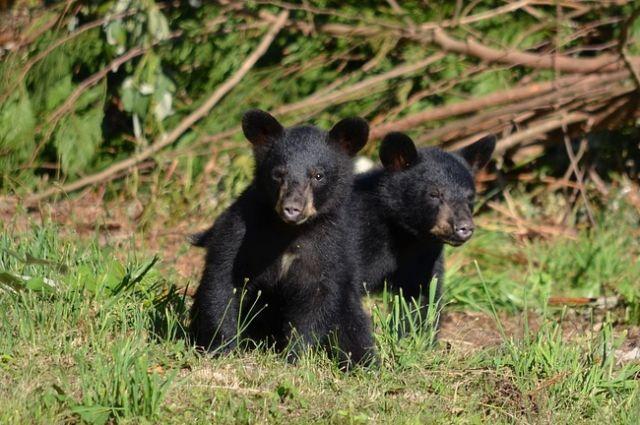 В Орске в передвижном зоопарке заканчивается корм для 40 зверей.