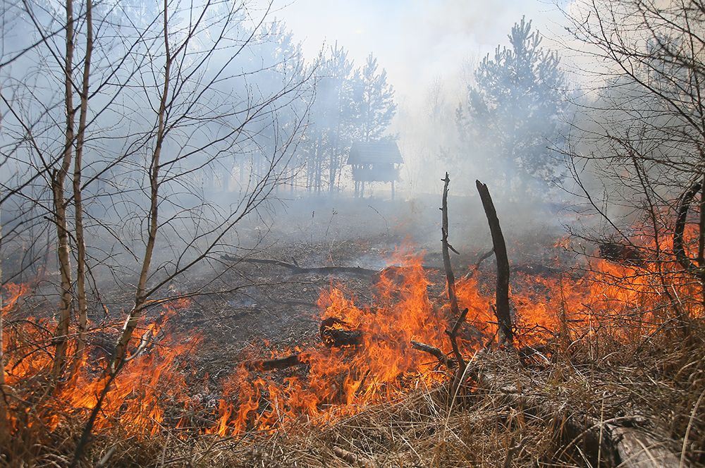 Лесной пожар, возникший в районе села Полесское.