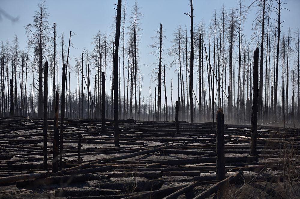 Сгоревший лес в районе села Полесское.