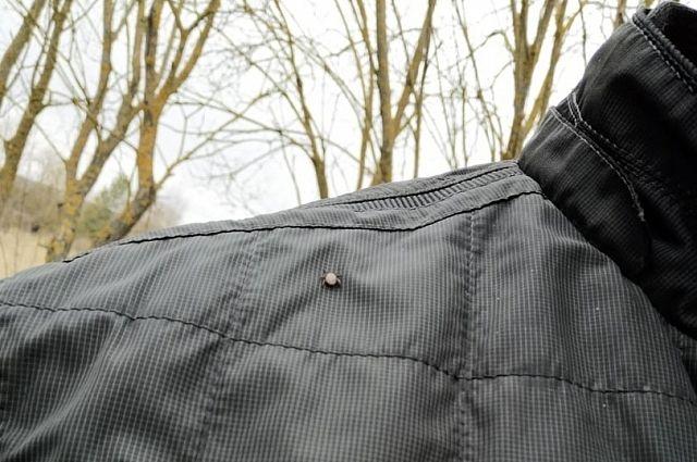 В Крыму в два раза больше человек пострадали от укусов клещей