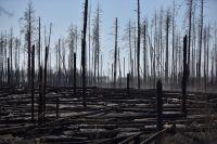 Последствия пожаров в Чернобыльской зоне отчуждения.