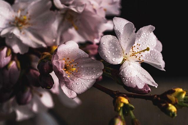 15 апреля: праздники дня, народный календарь, приметы, что нельзя делать