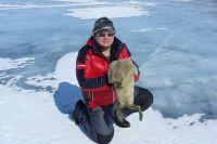 По последним данным, на Байкале около 130 тысяч нерп.