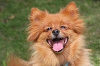 Не получив в назначенное время щенка и не дозвонившись до продавца, покупательница обратилась в полицию.