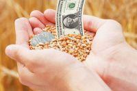 До конца апреля на торги интервенционного фонда Новосибирская область выставит ещё 3,6 тыс. тонн пшеницы 3-го и 4-го классов.