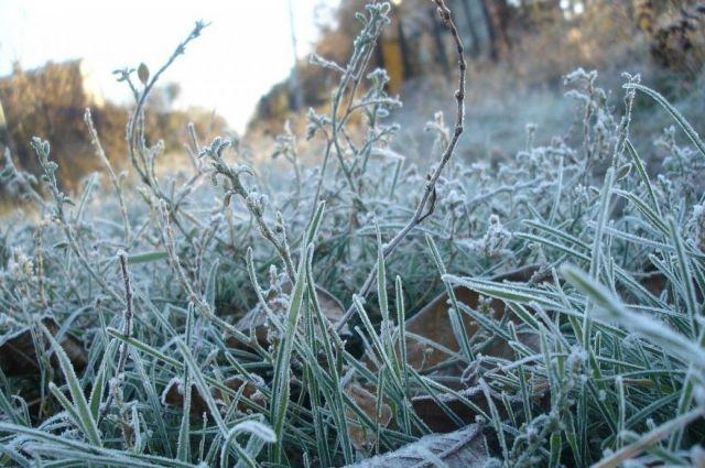 В Украине на Пасху прогнозируются ночные заморозки