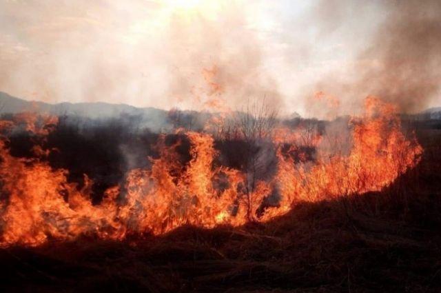 Германия поможет Украине оборудованием для борьбы с лесными пожарами