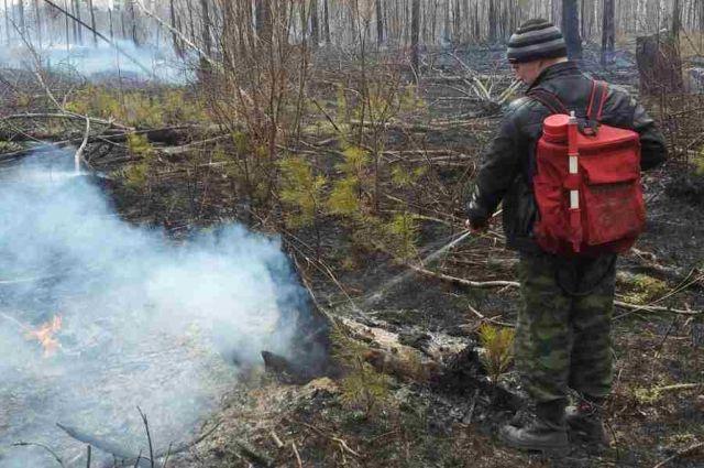 Тушили пожар 15 сотрудников лесной охраны и пять единиц наземной техники.