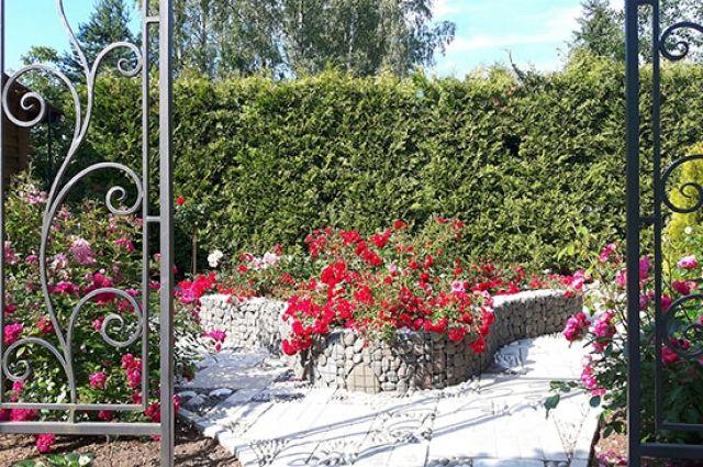 Габион треугольной формы с почвопокровными розами.