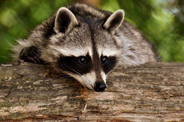 По подсчётам специалистов, животному миру причинили ущерб в 2,57 млн рублей.