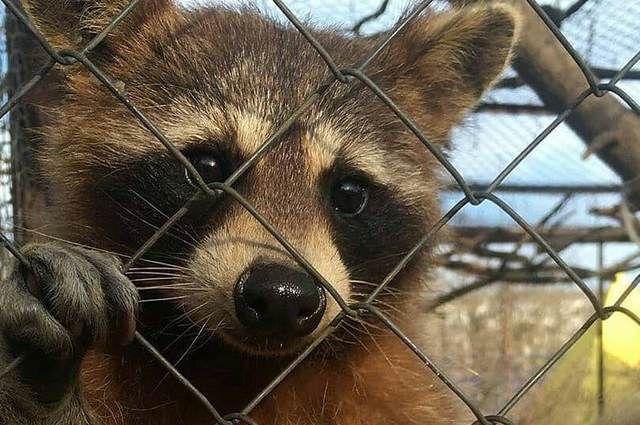 Некоторые животные скучают без посетителей.
