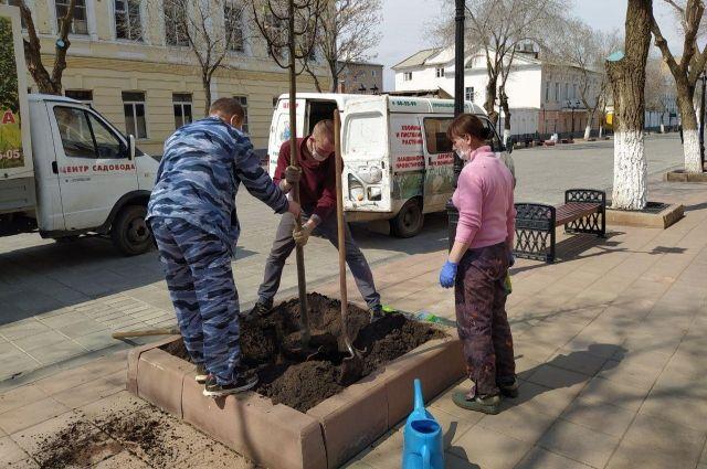 На главной улице Оренбурга высадят 50 деревьев