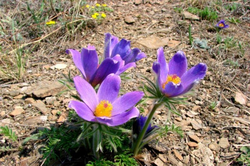 Эти в синем цвете.