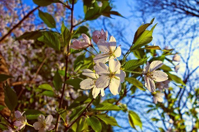 22 апреля: праздники даты, кто родился, День земли, народные предписания