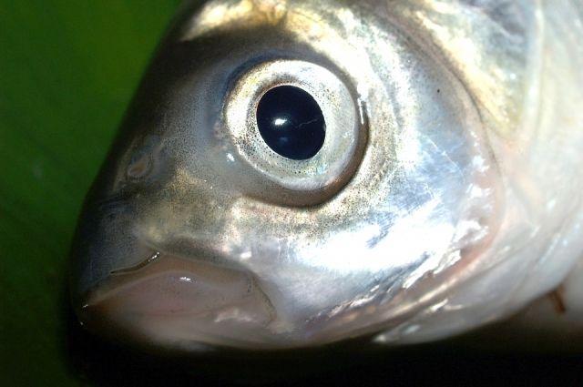Новопортовский рыбозавод ожидает начала весеннего подледного лова
