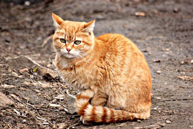 В Ижевске зарегистрировано три случая бешенства животных