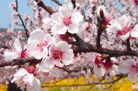 26 апреля: Антипасха, исторические события даты, запреты, предписания