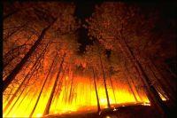 Всего с начала пожароопасного сезона зафиксировано 158 лесных пожаров.