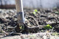 В Тюменской области дачники начинают посев