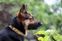 Когда мужчина увидел собаку, он даже не попытался скрыться. Подозреваемым оказался ранее судимый 40-летний местный житель.