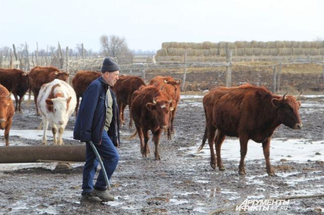 Средние цифры надоев на 1 квартал 2020 года составили 1293 кг молока на одну корову.