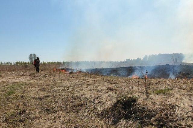 Общая площадь возгораний за минувшие сутки составила около 2 га.