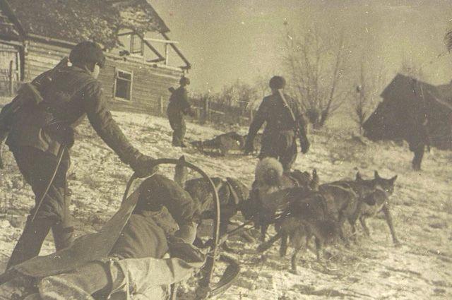 Упряжка санитарных собак вывозит раненого бойца втыл. Изальбома «Город-герой Ленинград». 1941-1942гг.
