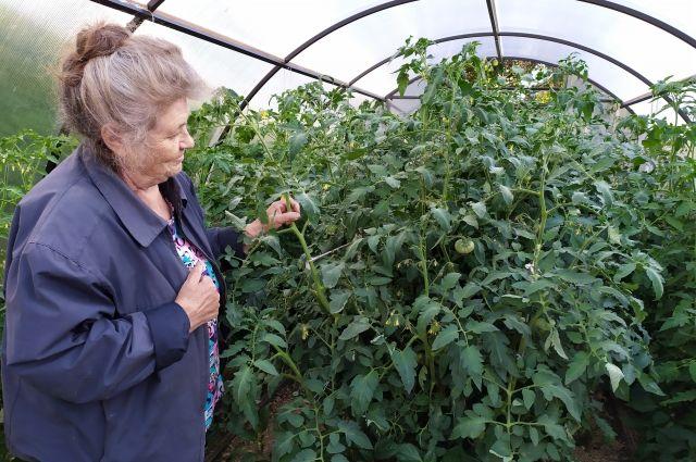 Всё больше и больше смолян говорят о том, что впервые за много лет готовы возродить посадки овощей на приусадебном участке.