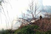 В Житомирской области при сжигании сухостоя погибла пенсионерка