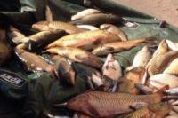 У мужчин, которые занимались незаконной ловлей, изъяты лодка, три сети и более полутора сотен выловленных рыб: щуки, караси, окуни и плотва.