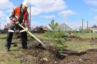 Каждое из шести предприятий СУЭК в Красноярском крае высадило по 75 саженцев.