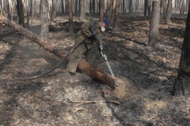 В Житомирской области ликвидировано возгорание на территории заповедника