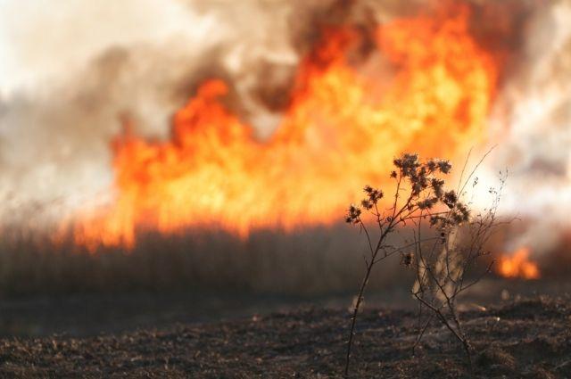 Оренбуржье горит от костров и пикников.