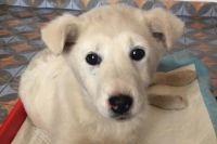 В Черновицкой области расследуют факт жестокого обращения с собакой