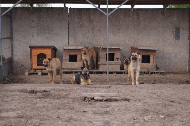 Из приюта для животных при монастыре пропали все его обитатели