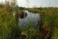 В озере под Тобольском утонул мужчина