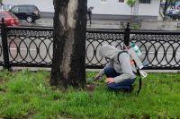 В Киеве каштанам сделали «прививки» от моли
